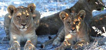 Des voyages en Namibie pour profiter d'innombrables sites incontournables